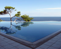 Pine-tree, pool & sea. Pine near pool on the bank of Black sea Royalty Free Stock Images