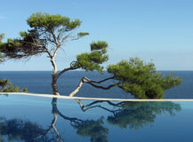 Pine-tree, pool and sea. Pine near pool on the bank of Black sea Stock Images