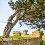 Pine tree in Populonia medieval village landmark, city walls and tower on background. Tuscany, Italy. Royalty Free Stock Photos