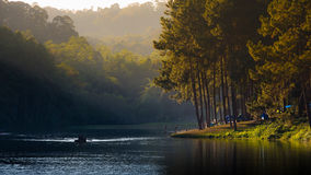 Pine tree and ray light at the Lake in the north of Thailand Royalty Free Stock Photography