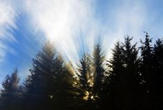 Pine Tree Rays Royalty Free Stock Photo