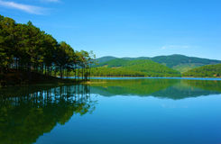 Pine tree reflect, Tuyen Lam lake Royalty Free Stock Photography