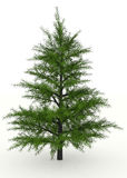 Pine tree rendered Stock Photography