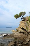 Pine tree on a rock Stock Photography