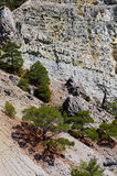 Pine-tree on the rock Royalty Free Stock Photography