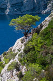 Pine tree on a rock. Pine tree on a steepy limestone rock in Calanques, a national park in southern France Stock Photography