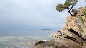 Pine tree on a rock. Above the sea stock video