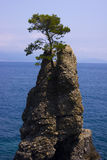 Pine tree rock in Italy Royalty Free Stock Photos