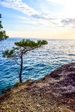 Pine tree on a rock royalty free stock image