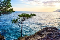 Pine tree on a rock stock images