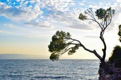 Pine tree on a rock stock photos