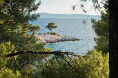 Pine tree on a rock over crystal clear turquoise water, Cape Amarandos at Skopelos island. Greece royalty free stock photos