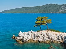 Pine tree on a rock over crystal clear turquoise water, Cape Amarandos at Skopelos island. Greece royalty free stock images