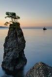 Pine tree rock in Portofino park Royalty Free Stock Images