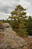 Pine tree on rock Stock Photo