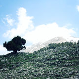 Pine tree and rocks. Distant mountain peaks on the background. Aged photo. Mountain Valley near Tahtali Dagi, Turkey. Stock Photos