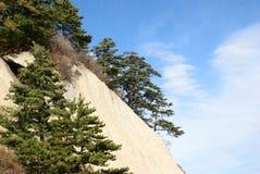 Pine tree  on the rocks Stock Image