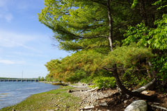 Pine Tree on rocky beach leading to a Bridge and Power lines Royalty Free Stock Images