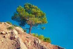 Pine tree on rocky mountains. Over blue sky royalty free stock photos