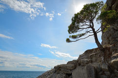 The pine tree on the rocky shore of the sea against the sky with backlit, Crimea royalty free stock images