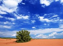 Pine tree in a sand Stock Photo
