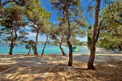Pine tree sand beach in Croatia Royalty Free Stock Photo