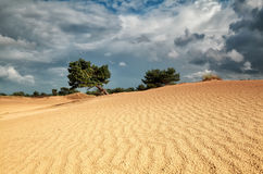 Pine tree on sand dune and cloudy sky. Drenthe, Netherlands Stock Images