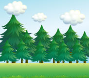 A pine tree scenery. Illustration of a pine tree scenery Stock Photography