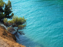 Pine tree and sea Royalty Free Stock Images