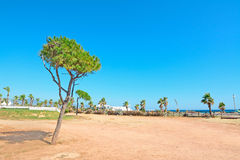 Pine tree by the sea Stock Photography