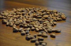 Pine tree seeds on a walnut wooden table Royalty Free Stock Photo