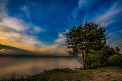 Pine. Pine tree on shore and bench for the rest royalty free stock image
