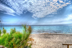 Pine tree by the shore in Le Bombarde beach Stock Photos