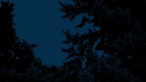 Pine Tree In Breeze At Night. Pine tree silhouette against the night sky stock footage
