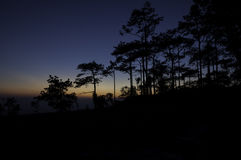Pine Tree Silhouette On Mountain Sunset Royalty Free Stock Images