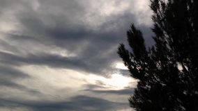 Pine tree silhouette swaying in the wind. Beautiful pine tree silhouette blowing in the wind with dark sky clouds background stock video