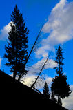 Pine Tree Silhouette Yellowstone National Park Stock Images