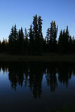Pine tree silhouettes Stock Image