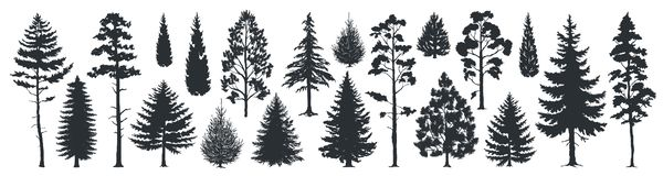 Pine tree silhouettes. Evergreen forest firs and spruces black shapes, wild nature trees templates. Vector woodland