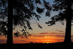 Silhouetted pine trees frame orange sunset Royalty Free Stock Photography