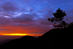 Pine Tree, silhouettes, mountain, sky, landscape Royalty Free Stock Photography