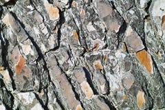 Pine tree skin texture. Detail stock image
