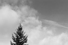 Pine Tree and Sky. The top of a snow covered tree pokes up into a cloudy sky royalty free stock image