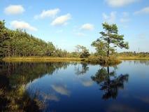 Beautiful small lake with small island in Aukstumalos swamp, Lithuania stock photos