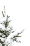 Pine tree with snow Stock Photography