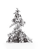 Pine tree in snow Stock Photography