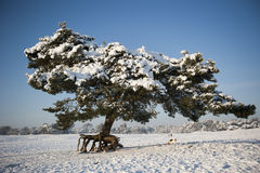 Pine tree in snowy landscape with dog Stock Photo
