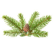 Pine tree sprig with cone isolated on white background Stock Photos