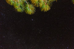 Pine tree with star in sky Stock Images