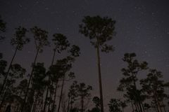 Pine tree stars Stock Images
